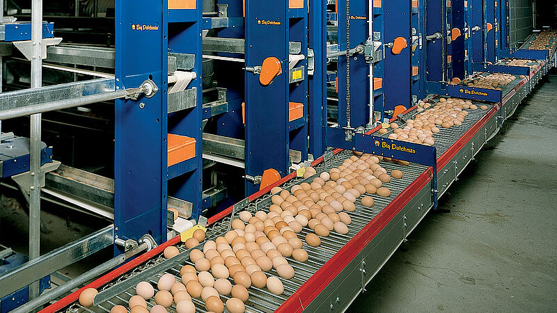 Lift untuk pengumpulan telur di kandang unggas