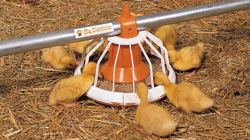 Pertumbuhan unggas: Wadah makanan Big Pan Plus untuk peternakan bebek