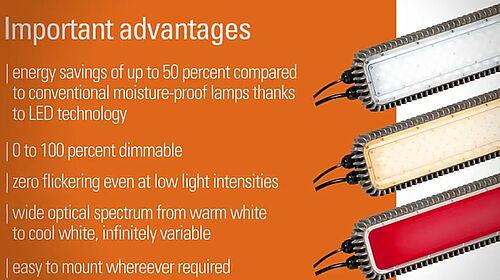 Iklan: keuntungan pencahayaan untuk kandang unggas dengan ZEUS