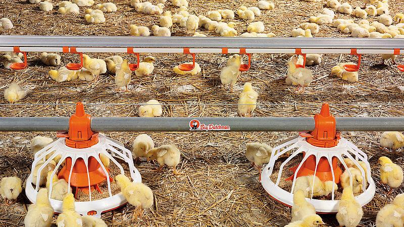 Wadah pakan FLUXX untuk pertumbuhan ayam pedaging